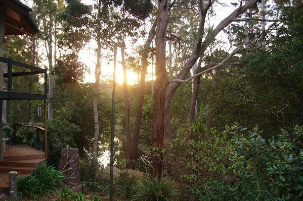 rainforest accommodation near brisbane